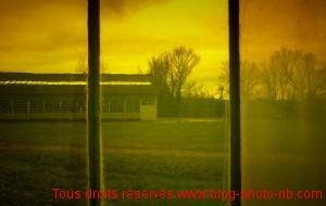 Arbre à travers la fenêtre de la verrerie de Saint Just Saint Rambert