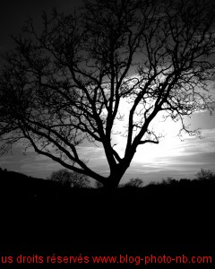 Arbre sur fond de coucher de soleil - Côte d'or, Bourgogne