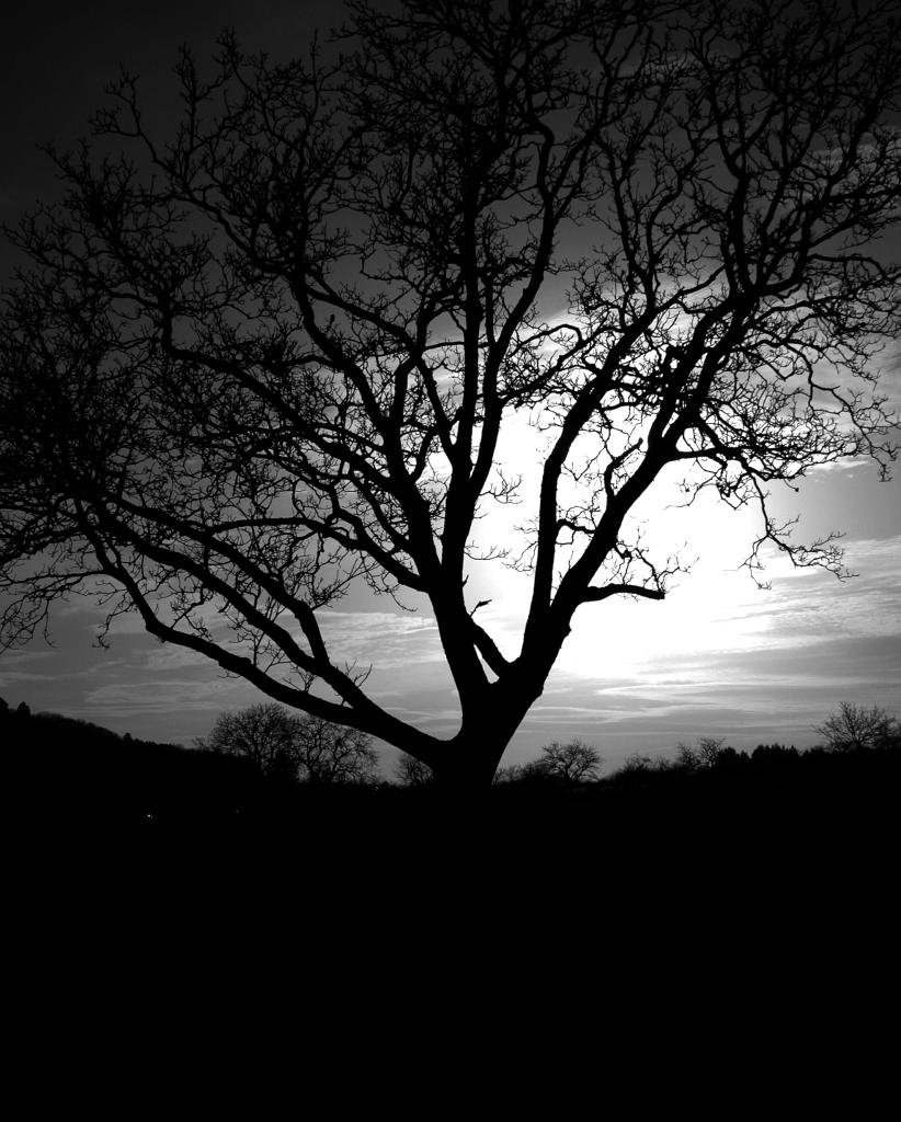 Photo noir et blanc d'un arbre, Bourgogne