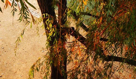 Photo d'un arbre aux couleur automnales, Lyon