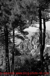 Les Calanches de Piana, côte Corse