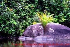 Zen Garden, Cameroun