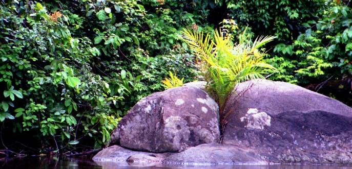 Photo couleur forêt tropicale - Cameroun