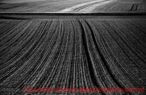 Champ de blé d'hiver, Côte d'Or - proche de Dijon, Bourgogne.