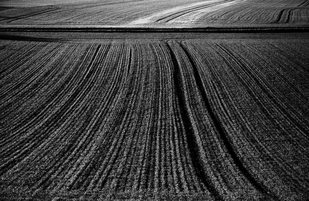 Photo noir et blanc d'un champ de blé d'hiver, Côte d'Or