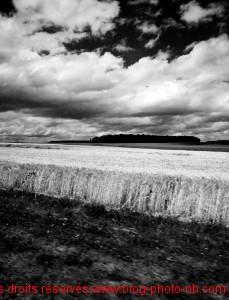 Champ de blé en Haute Saône