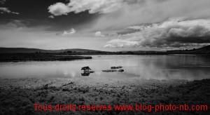 Chien errant dans un petit lac - EL Calafate, Patagonie, Argentine