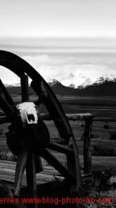 Crane de buffle sur fond de montagne. El Calafate, Argentine