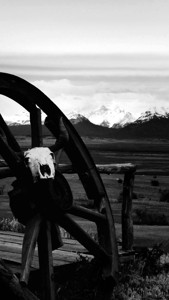Photo noir et blanc d'un crâne de buffle, Argentine
