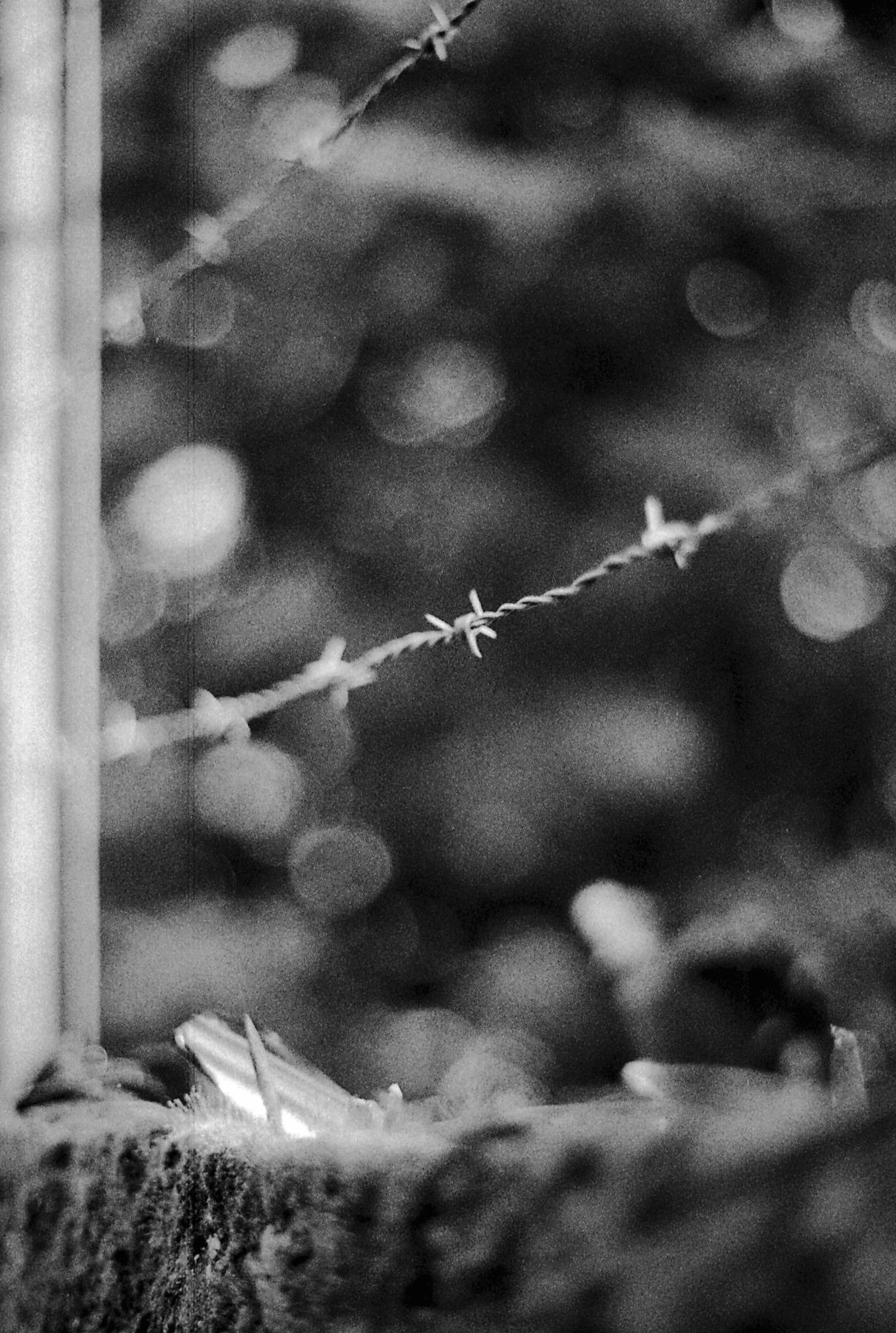 Photo noir et blanc de fil de fer barbelé, sur les hauteurs de Lyon