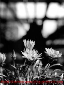Flower Power, un été à l'Isle sur la Sorgue - Vaucluse (83)