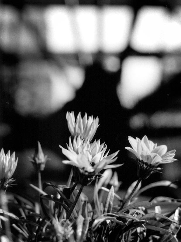 Photo noir et blanc de fleur, Vaucluse (83)