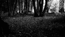 Photo noir et blanc forêt du parc de Lacroix Laval, Lyon