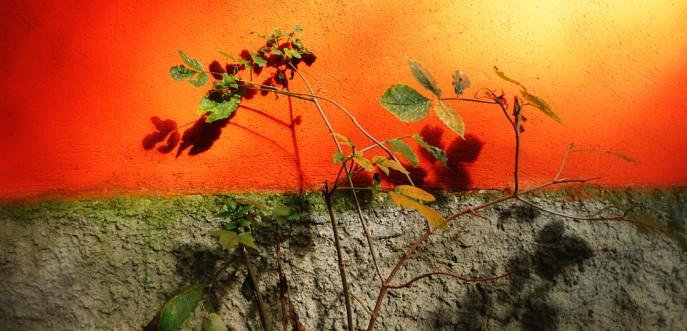 Photo couleur de nature à Prague, République Tchèque