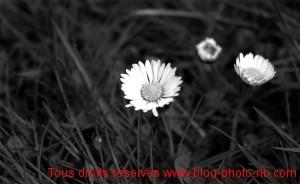 Paquerettes, la nature se réveille au printemps