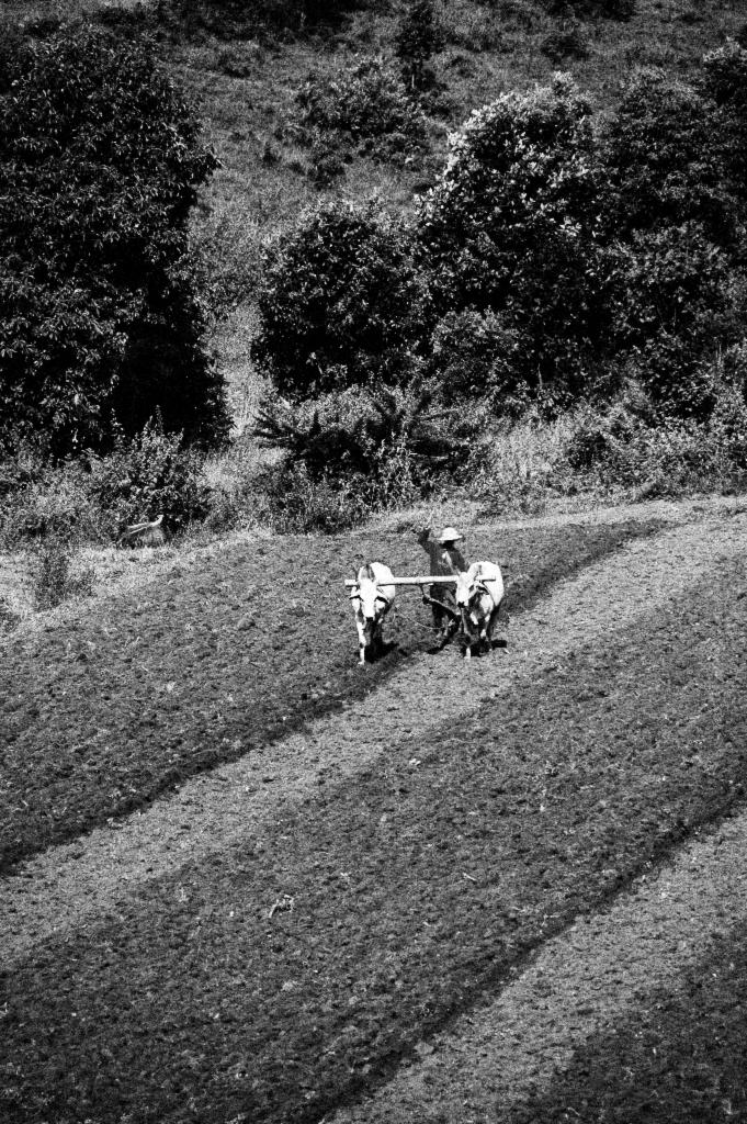 Paysan birman entre Kalaw et Pindaya