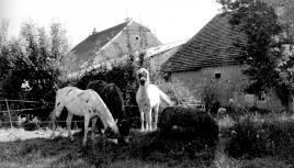 Photo noir et blanc de chevaux, Haute-Saône