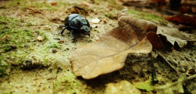 Photo couleur petit scarabée