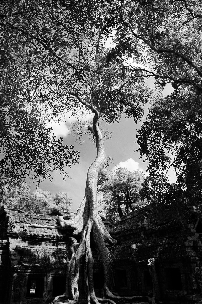 Ta Prohm - Angkor (Cambodge)