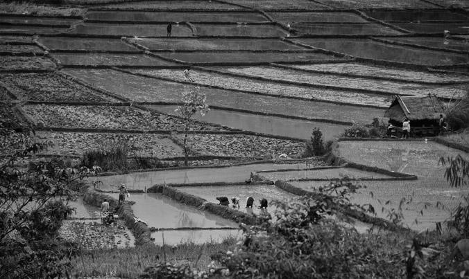 Rizières et paysans au nord ouest du Laos