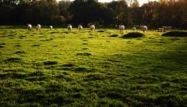 Photo couleur de vaches en Haute-Saône