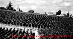 Ballade dans les vignes de Fixin - Bourgogne
