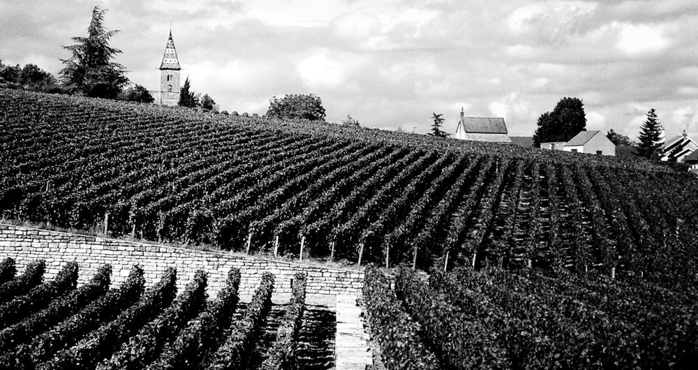 Photo noir et blanc d'un vignoble à Fixin - Bourgogne