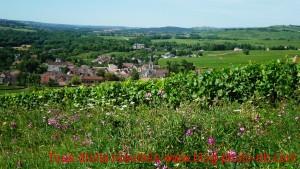 Vignoble bourguignon : les vignes de Santenay - Saône et Loire, Bourgogne