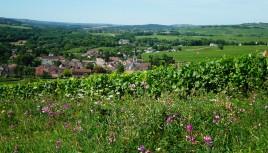 Photo couleur des vignes à Santenay, Bourgogne