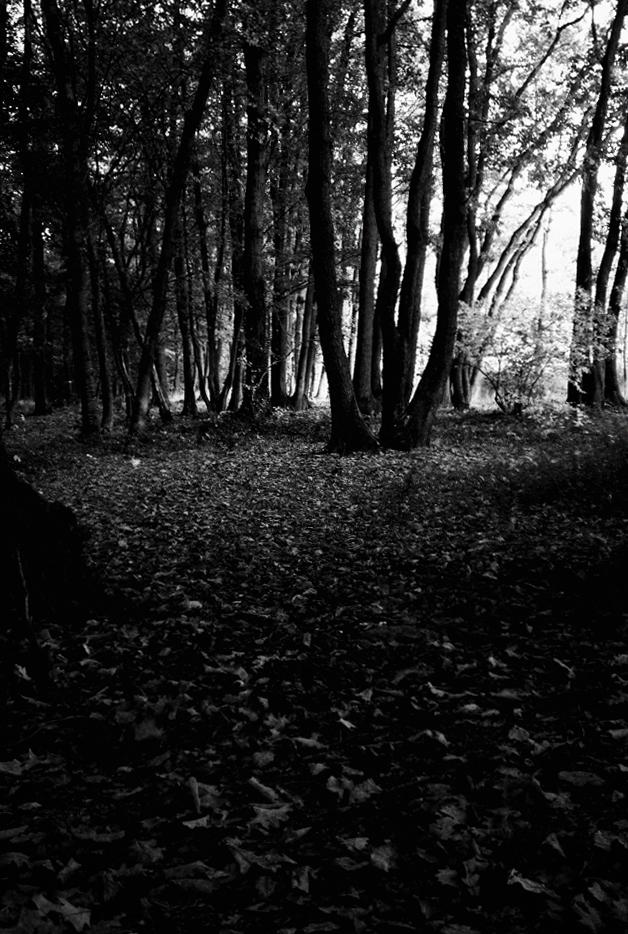 parc de lacroix laval lyon octobre 2008 photos noir et blanc. Black Bedroom Furniture Sets. Home Design Ideas